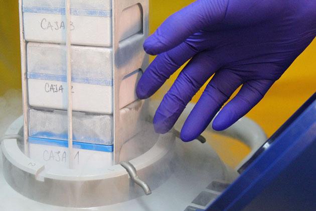 Laboratorio-Inmunoterapia-muestras-de-tejidos-criopreservados