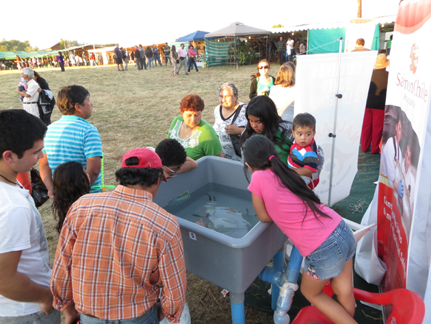 Feria Villarrica 1