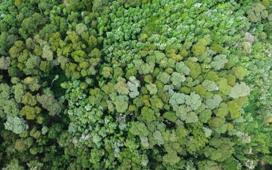 en 40 años el bosque nativo más diverso de Chile ha disminuido 19%