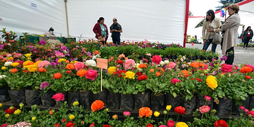 Expo flores y jardines 2017 este fin de semana en el for Viveros en temuco