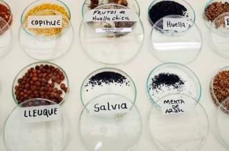 UFRO curadoras semillas